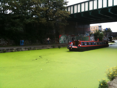 Regents canal at The Oval